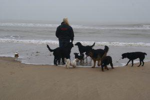 Klik op deze foto voor nog meer strandfoto's